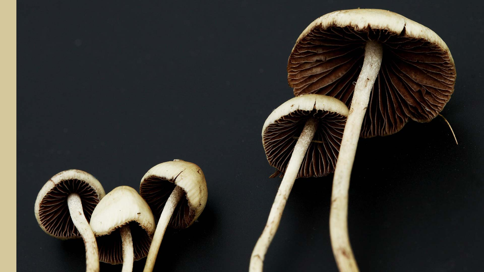 Find the best shrooms with good properties