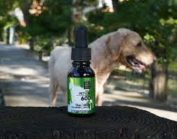 CBD For Dogs: How To Choose The Best Product